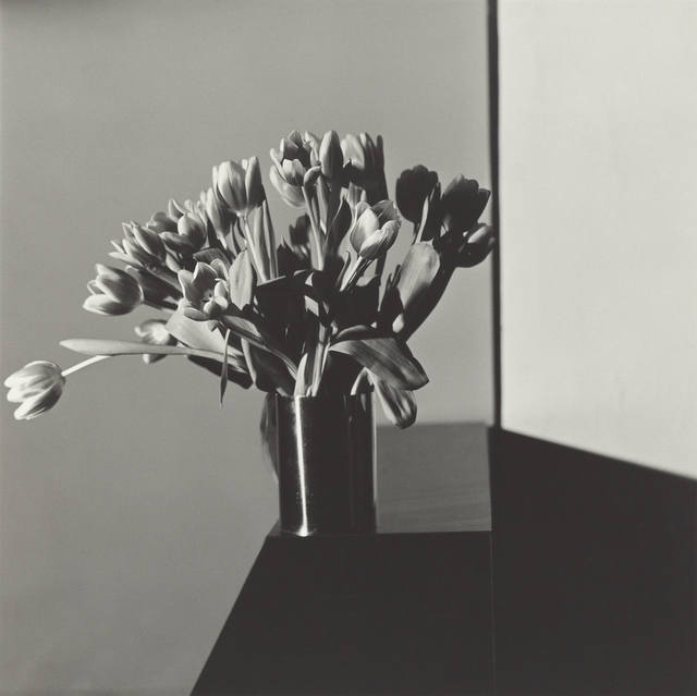 Robert Mapplethorpe - Tulips  (1977) Immagine: Robert Mapplethorpe, Tulips 1977 - https://www.artsy.net/artwork/robert-mapplethorpe-tulips-4